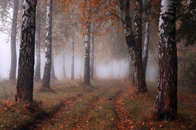 Осень - фото