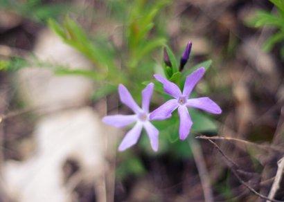 Цветы на Машуке