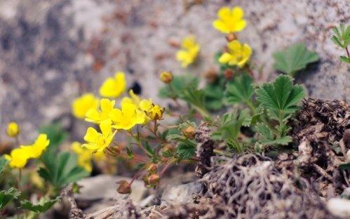 Первоцветы на Машуке