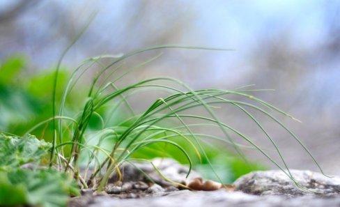 Воздушная травка