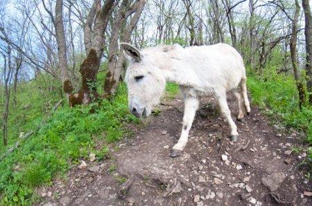 Достопримечательность Машука - ослик