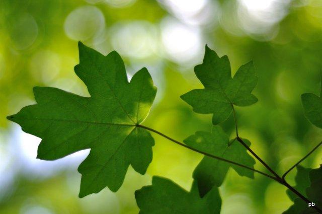 Боке Nikkor 50 1.8 D, фото листвы