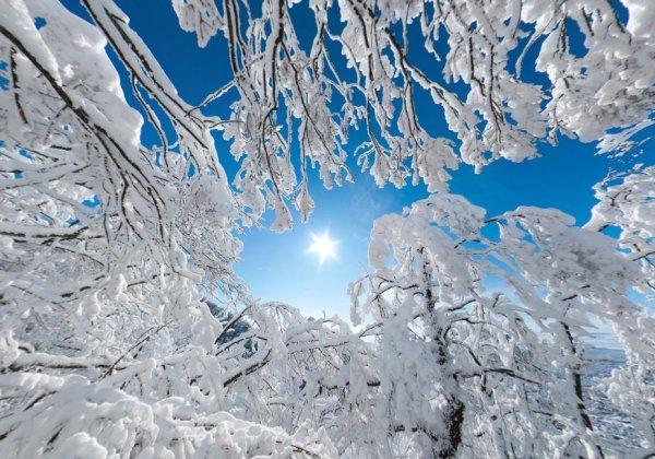 Зимняя панорама в лесу Машука