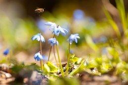 Весна и цветы на Машуке