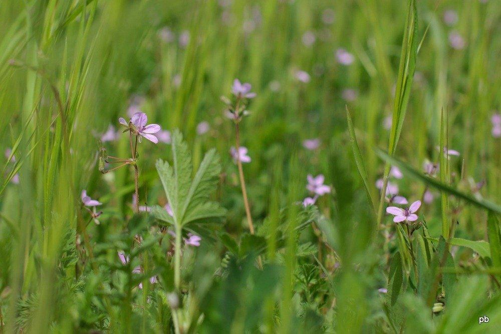 Первоцветы - фото