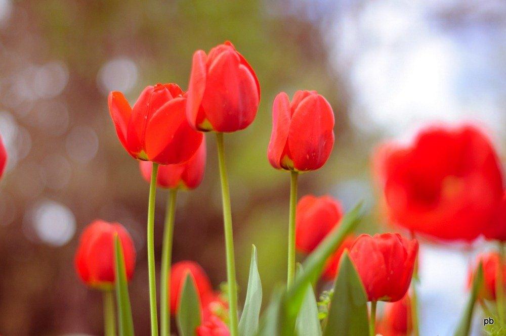 Весна идет по Пятигорску