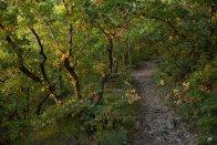 Зеленые дубы на Машуке