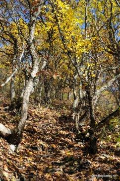 autumn-pyatigorsk-16