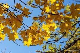 autumn-pyatigorsk-25