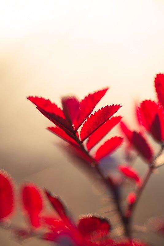 Ярко-красное растение