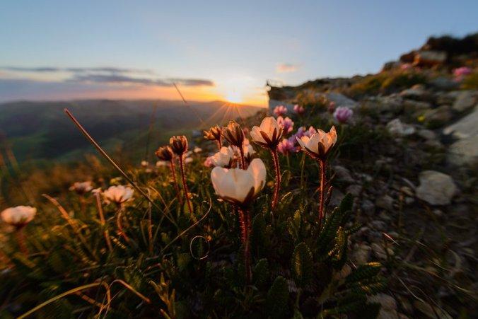 Цветы Большого Бермамыта