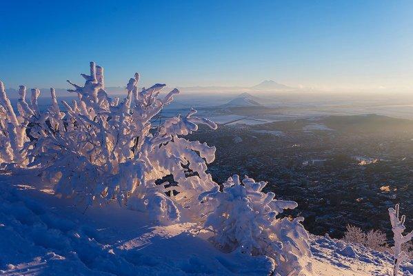 Кусты в снегу, Юца и Джуца