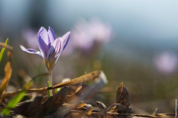 Весенние цветы на Машуке