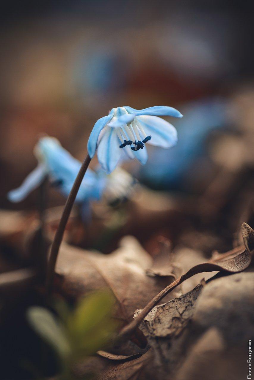 Макро весенние цветы