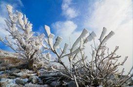 Замерзшие деревья Бештау