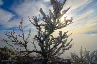Деревце в инее - Бештау