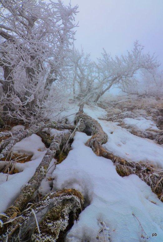 Лес в инее и снегу