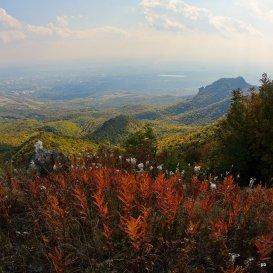 Осенний Иван-чай на Бештау