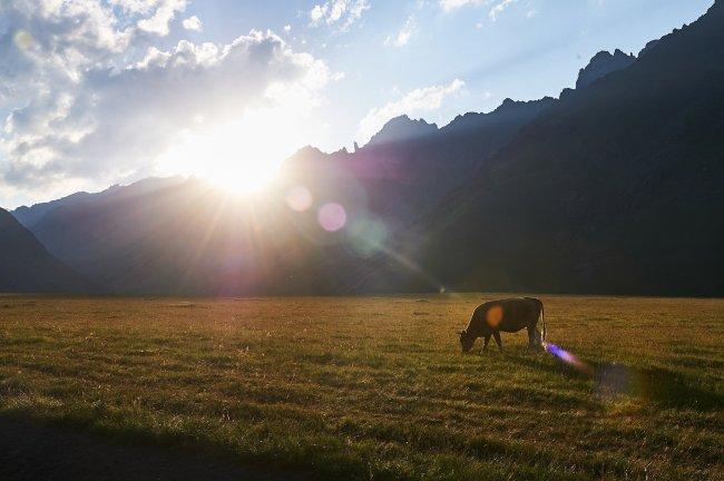 Вечер на поляне Эммануэля