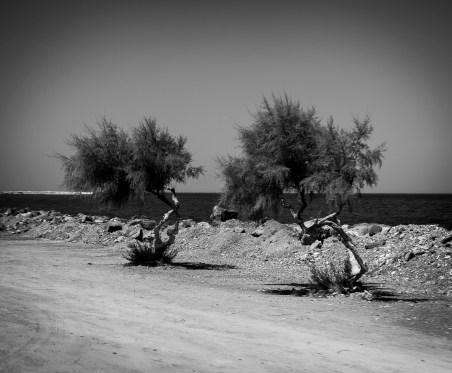 Cesta do Karlovasi (Samos / Řecko | srpen 2012)