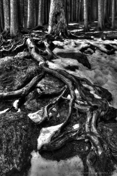 In the clutches of the ents (Čertovo Jezero | leden 2014)