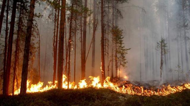 U julu su se žitelji švedskih okruga Gavleborg, Jamtland i Dalarna borili protiv vatrene stihije