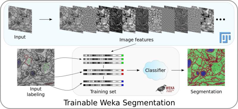 Trainable Weka Segmentation pipeline overview
