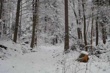 zima na czarnym szlaku z pcimia na kudłacze w beskidzie makowskim