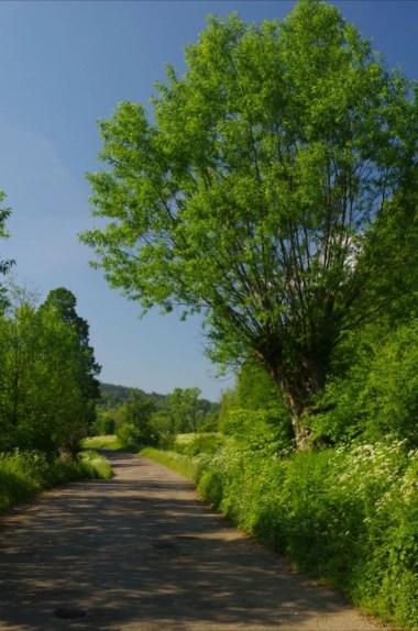 droga prowadząca przez opuszczoną dolinę czeremchy w beskidzie niskim na podkarpaciu