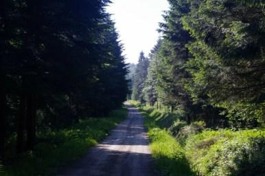 droga prowadząca przez opuszczoną dolinę jasiela w beskidzie niskim
