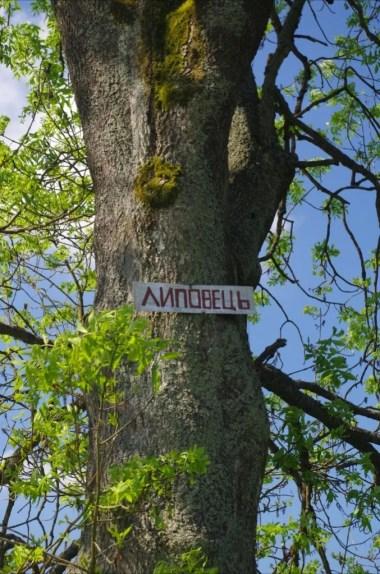 drzewo z nazwą miejscowości w lipowcu, opuszczonej wsi w beskidzie niskim na podkarpaciu
