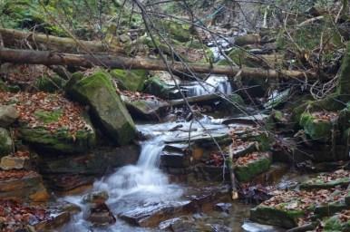 górski potok na żółtym szlaku z koskowej góry do makowa podhalańskiego w beskidzie makowskim