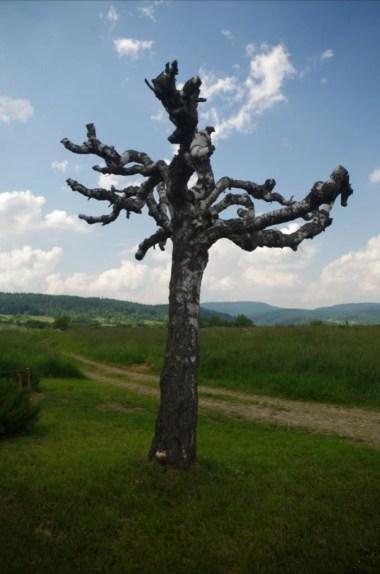 kikut drzewa przy kapliczce na trakcie węgierskim w okolicy jaślisk w beskidzie niskim