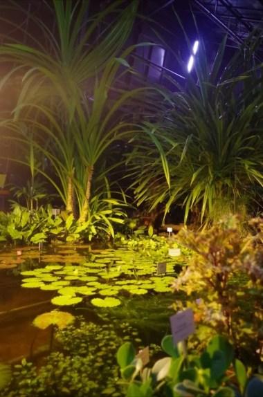 palmiarnia ogrodu botanicznego w krakowie podczas nocy muzeów