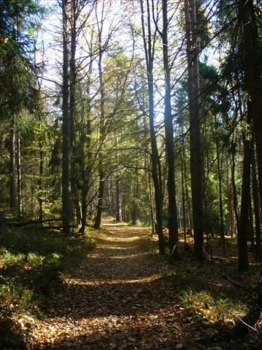 żółty szlak z pcimia na działek w beskidzie makowskim w jesiennych barwach