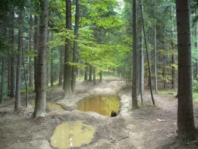 na szlaku z plebańskiej góry do myślenic w beskidzie makowskim