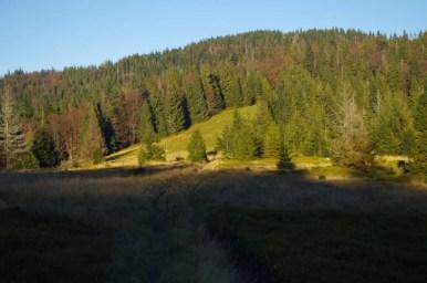 na szlaku z przełęczy borek na kudłoń w gorcach