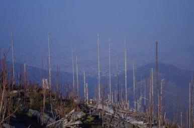 na szlaku ze skrzycznego do twardorzeczki w beskidzie śląskim, panorama na północ i kikuty drzew