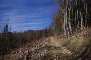 na szlaku z twardorzeczki na magurkę radziechowską w beskidzie śląskim