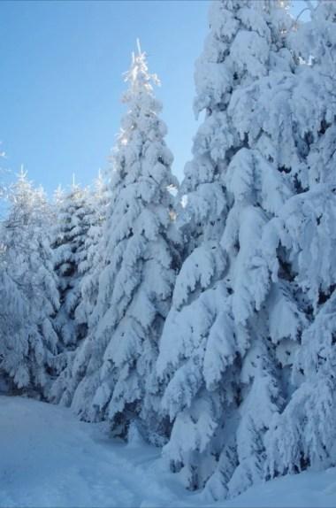 okiść śniegowa pod luboniem wielkim w beskidzie wyspowym