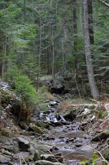 czarna rzeka na szlaku z mogielicy do słopnic królewskich w beskidzie wyspowym