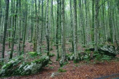 las w okolicy jeziora bohinj w alpach julijskich w słowenii