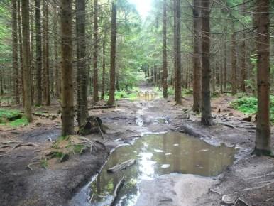 szlak z mraźnicy na przełęcz kubalonka w beskidzie śląskim