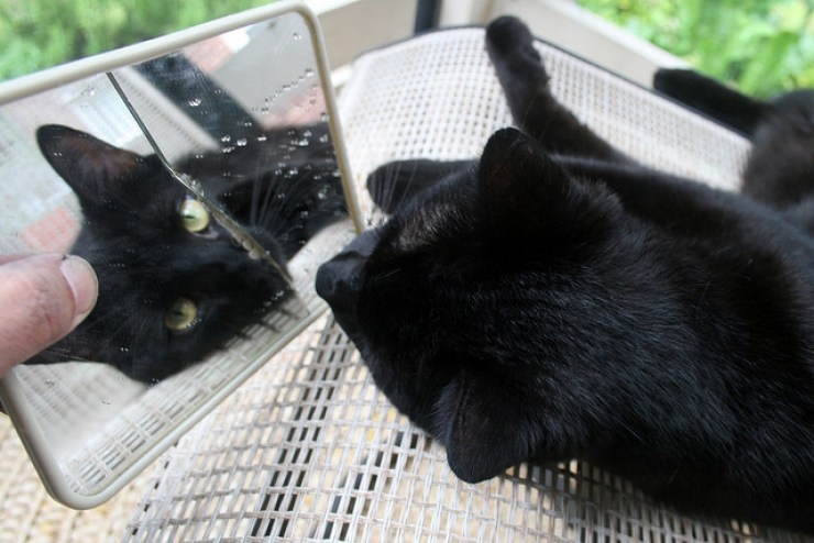 Black Cats – Good Luck or Bad Luck?