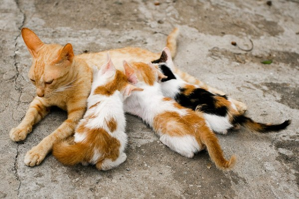 Why do cats purr? | The Healing Power of a Cats Purr