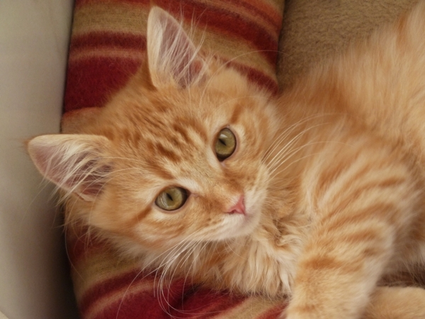 On your kitten's first night in your home, we suggest creating a comfortable, secluded space so she can settle in and get used to the sights, sounds and smells of her new environment | Welcoming a New Kitten Into Your Home