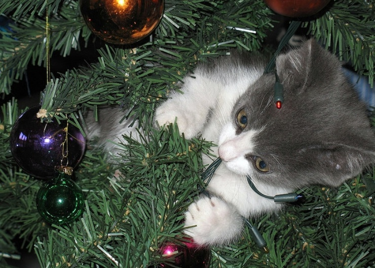 With sparkling lights, glittery dangling ornaments and shiny strips of tinsel, Christmas trees are irresistible to most cats   10 Tips to Cat Proof Your Christmas Tree