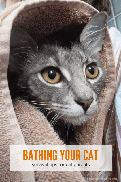 Cats generally groom themselves but there are times when you will need to give your cat a bath, follow our tips and make bathing your cat stress free | How to Survive Bathing Your Cat