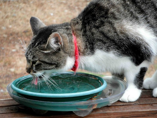 What's your cat's favourite water bowl? | 10 Tips to Encourage Your Cat to Drink More Water