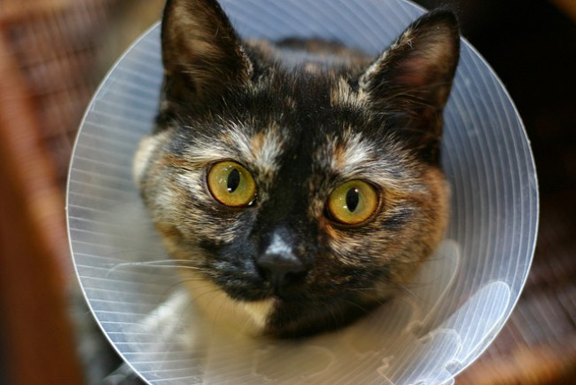 Getting your cat desexed is about making a difference and being a responsible pet owner. Desexing saves lives. | World Spay Day – Desexing Your Cat